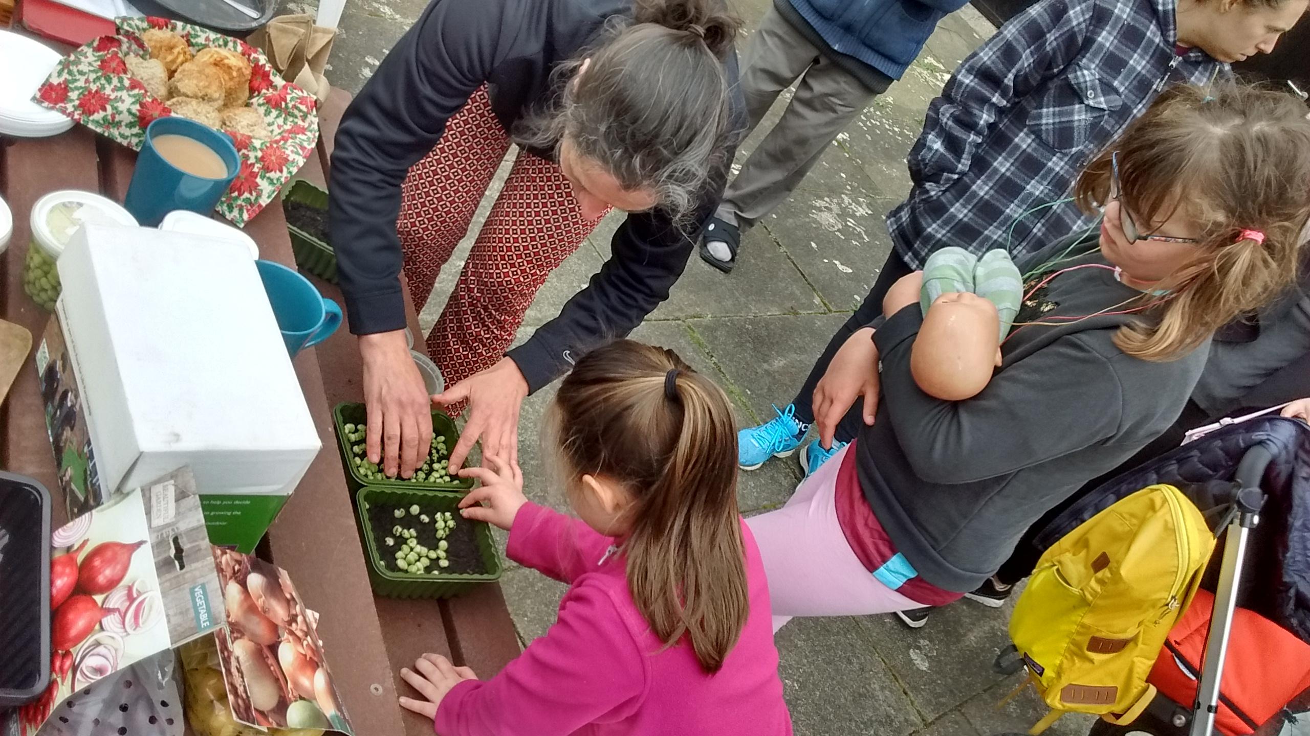 Planting Marrowfat Peas